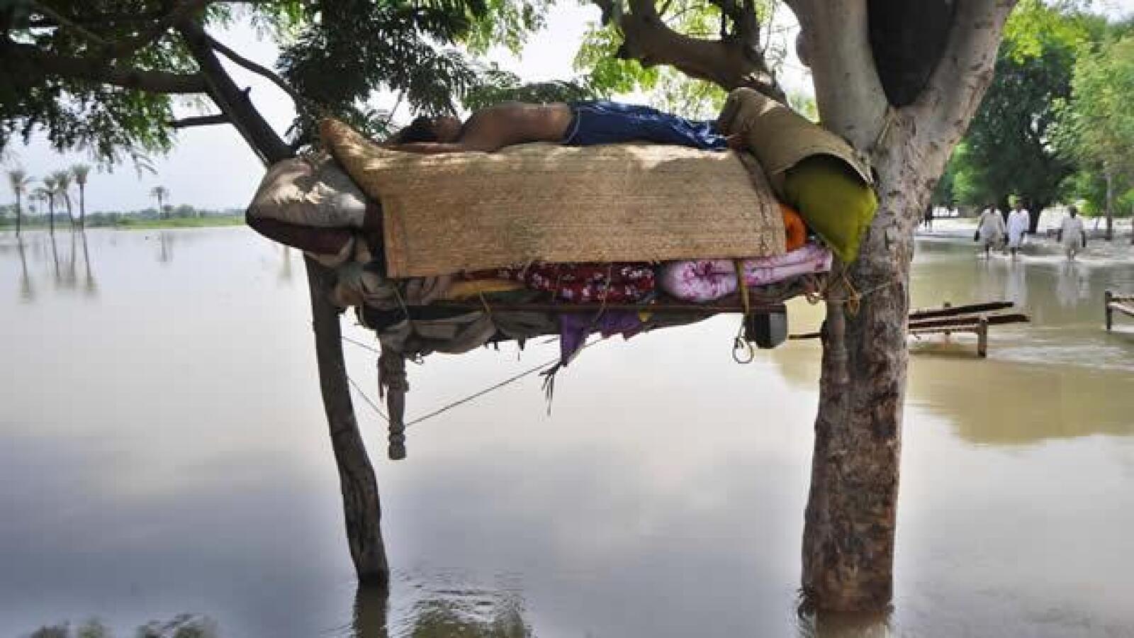 Chavo descansa en la rama de un arbol en pakistan