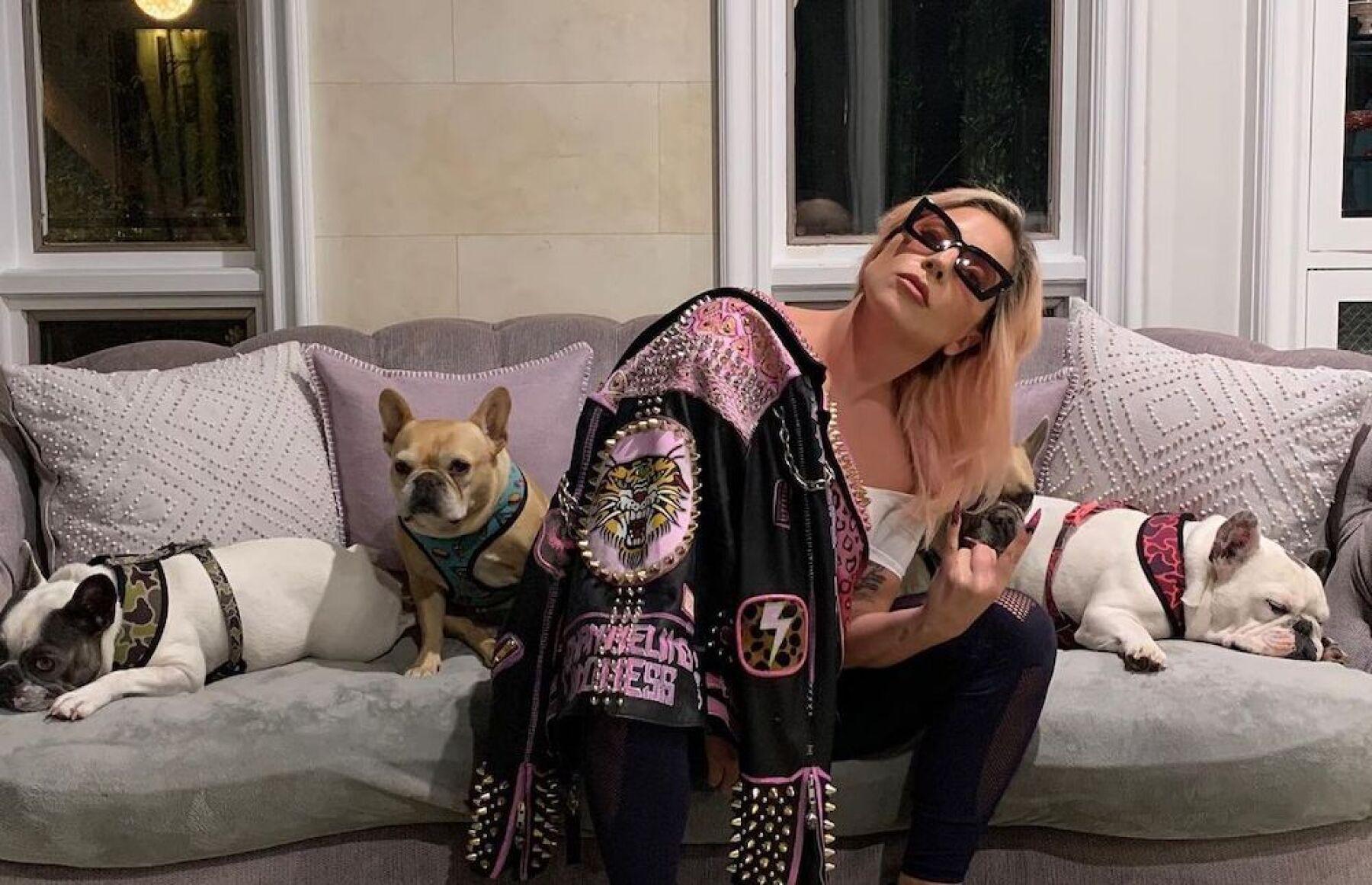 lady-gaga-perros.jpg