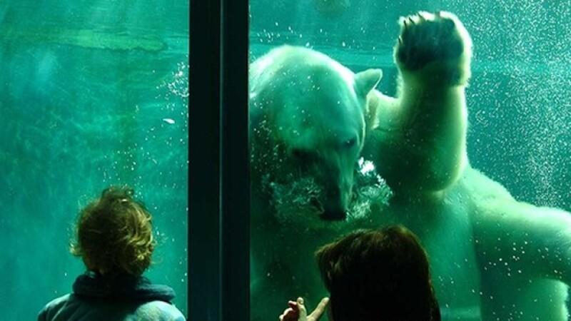zoo budapest animales
