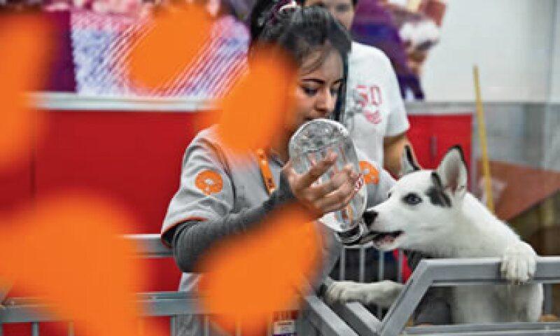 Maskota nació en 1994, cuando no había tiendas de animales ni productos para ellos. Hoy tiene 5% del mercado. (Foto: Jesús Almanza/Revista Expansión)