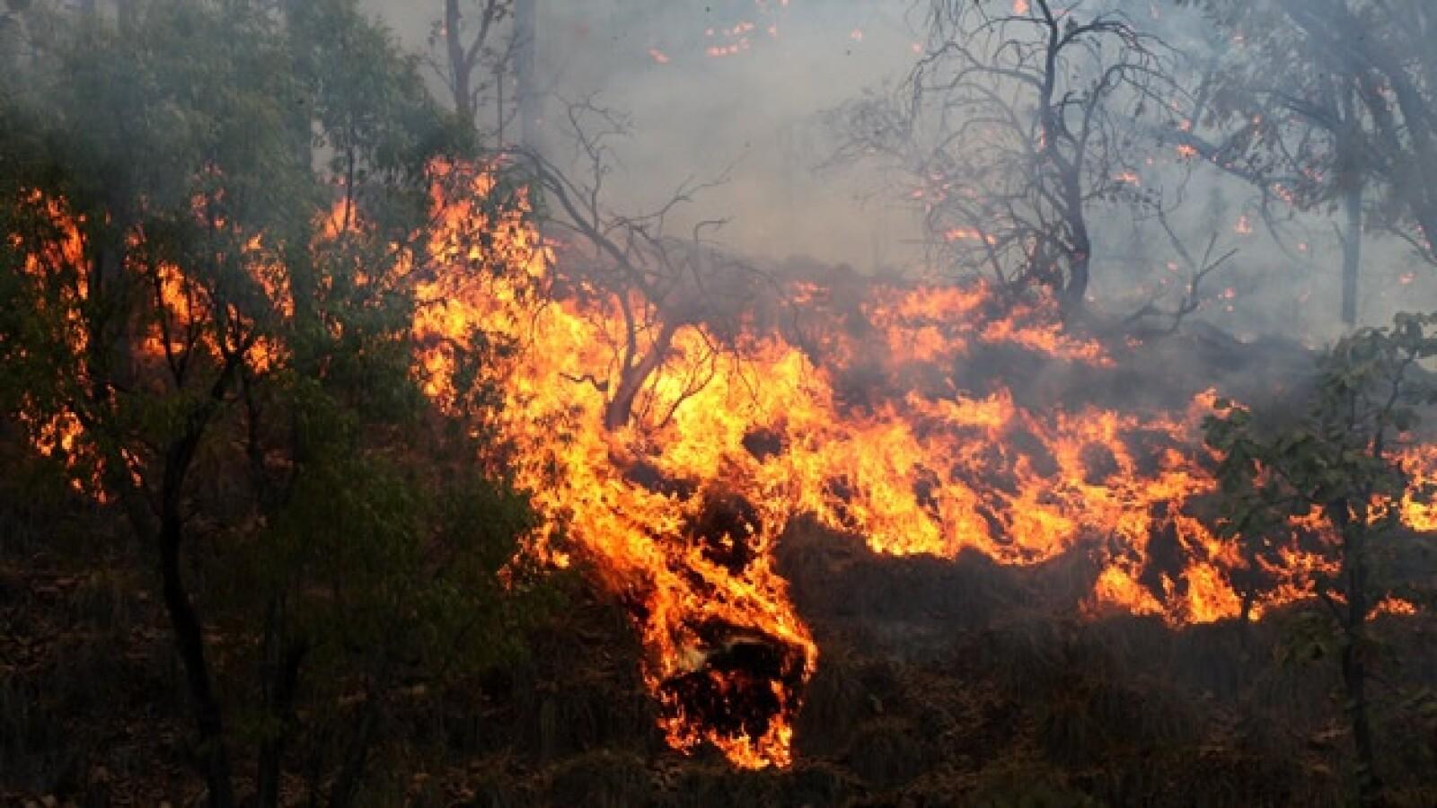 incendio La primavera guadalajara 3