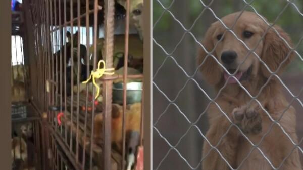 La fiesta de la carne de perro en China es victima colateral del coronavirus
