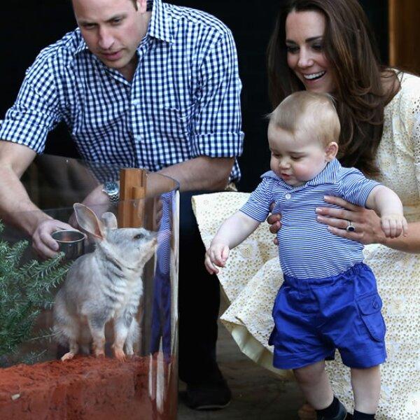 George conociendo a un bilby llamado George en honor a él en el zoológico de Sidney.