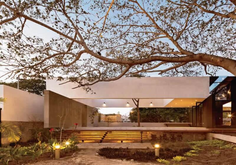 Casa del árbol 1