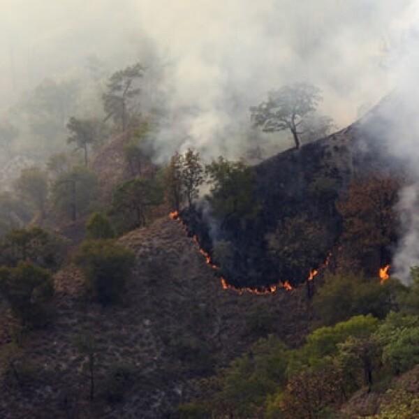 Un incendio consumo el bosque La Primavera