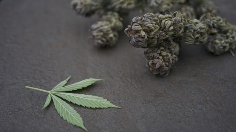 El uso de la marihuana con fines medicinales se anunció para Jamaica en este año