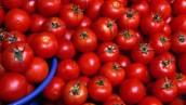 tomates rojos y bonitos