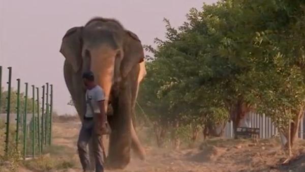 El primer hospital para elefantes de la India abre sus puertas