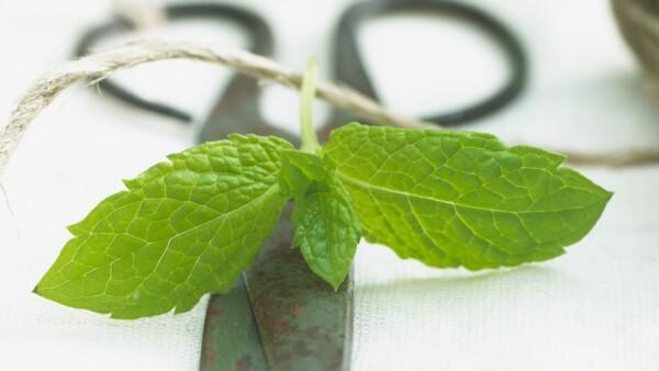 hierbas-aromaticas-cocina
