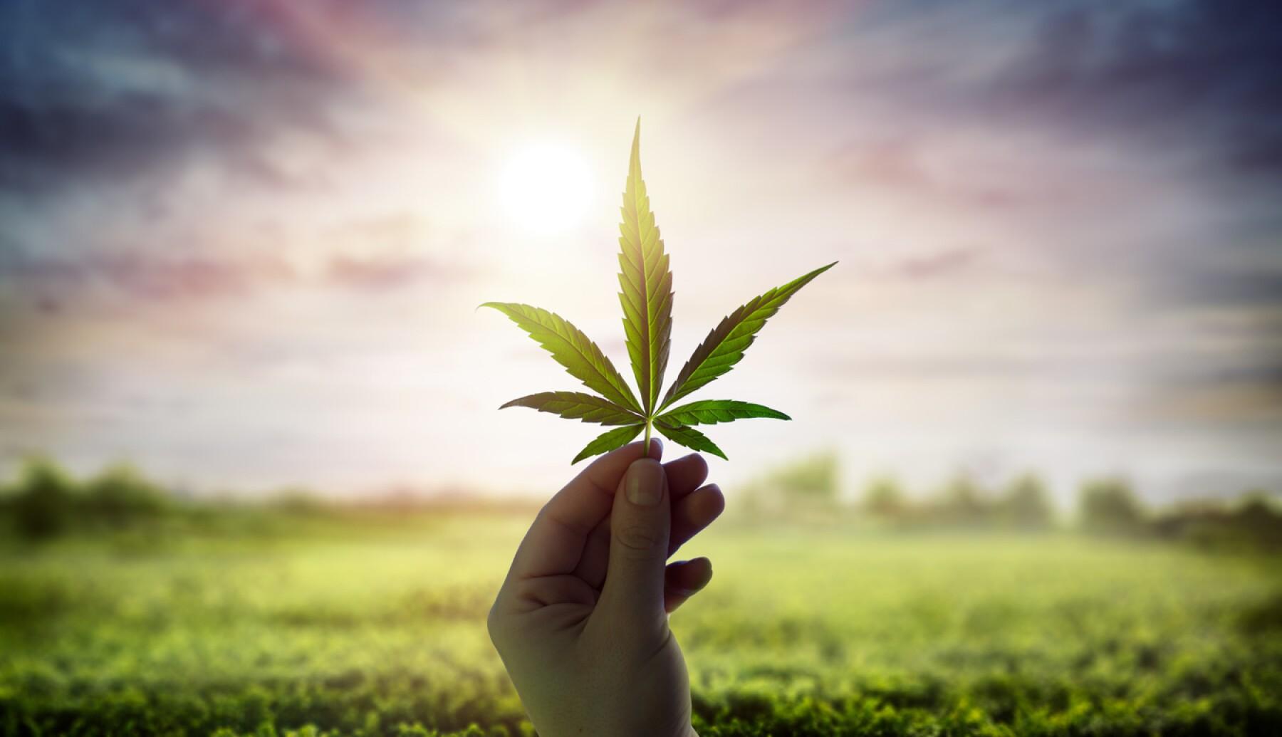 Legalizazión mariguana empresas