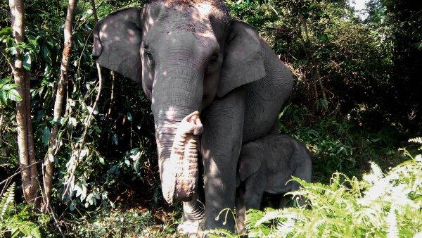 Más de un cuarto de la población mundial de elefantes ha sido exterminada en 10 años