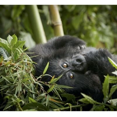 ruanda_3.jpg
