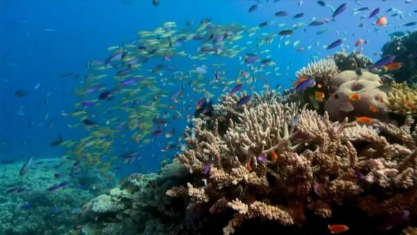 La mitad de los corales de la Gran Barrera murió en los últimos 25 años