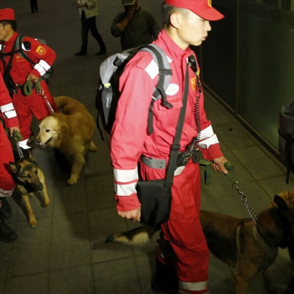 Perros China rescate sismo Nepal