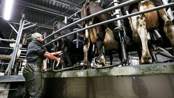 Las importaciones de leche en polvo en 2015 fueron de 259,479 toneladas.