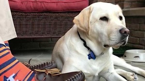 Así fue el entrenamiento de Sully, el perro de terapia y servicio de George Bush