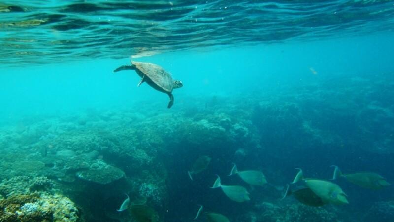 parques marinos australia tortugas oceanos