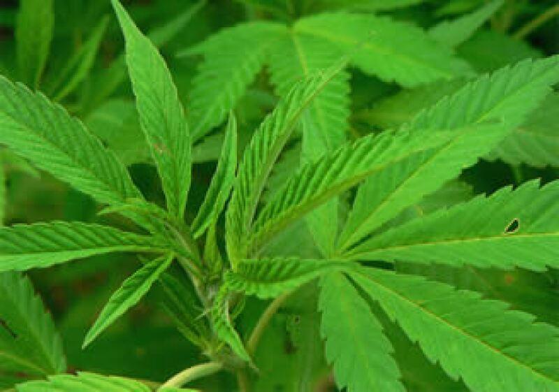 La granja ha operado legalmente durante alrededor de 10 años produciendo mariguana para uso medicinal. (Foto: Cortesía SXC)