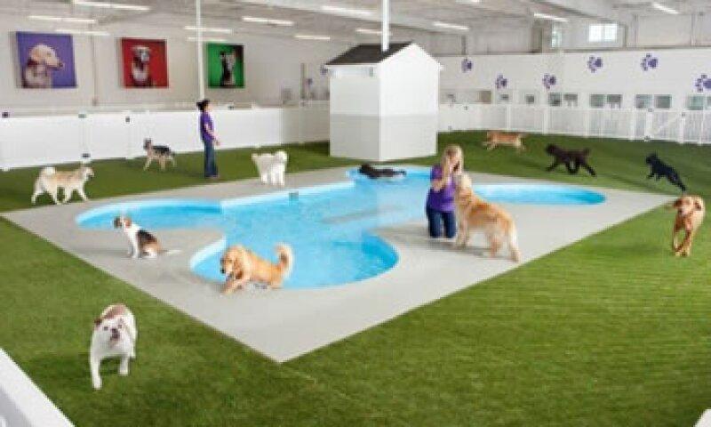 Este es un ejemplo de cómo se verá la alberca para perros. (Foto: Ark Development/Cortesía)