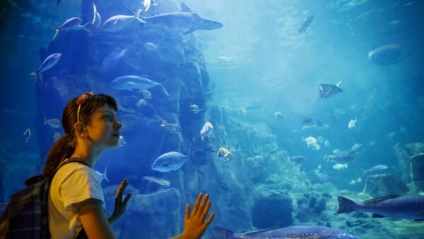 Blau Life Ventura Park acuarios