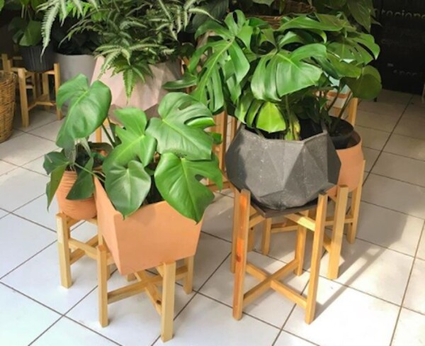 flor-y-barro-plantas