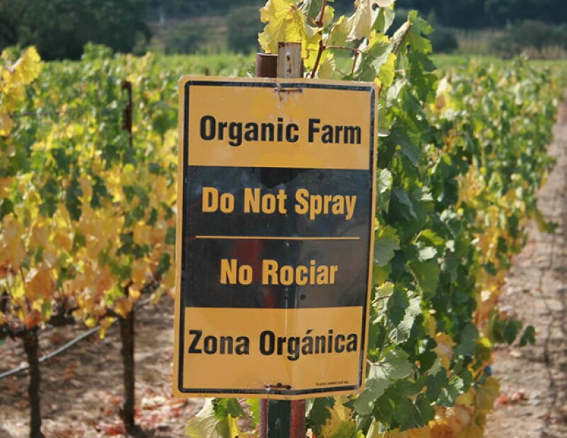La comida en las granjas orgánicas no está expuesta a pesticidas y fertilizantes ni químicos.