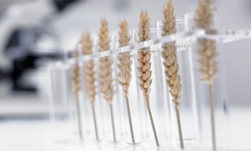Mejores prácticas harán que México sea líder en innovación para el desarrollo agrícola, dice Carlos Slim. (Foto: Getty Images)