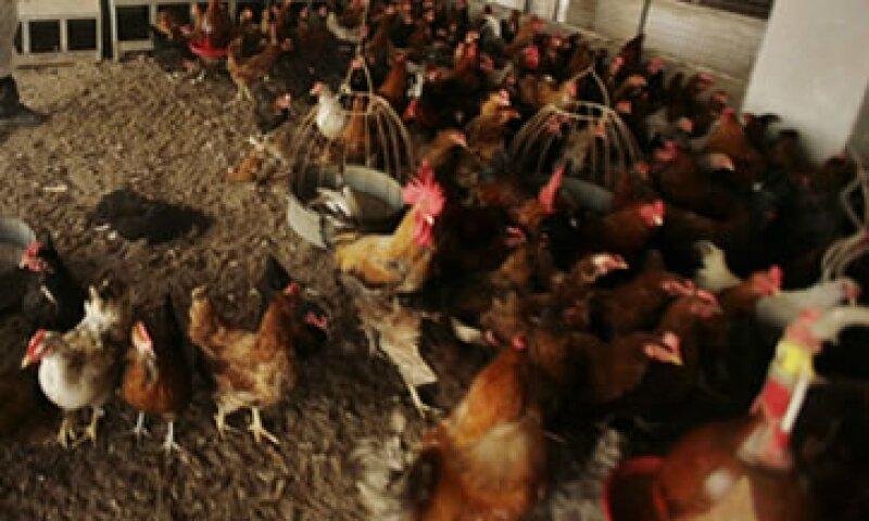 Los recursos se otorgarán en condiciones preferenciales a los productores afectados. (Foto: AP)