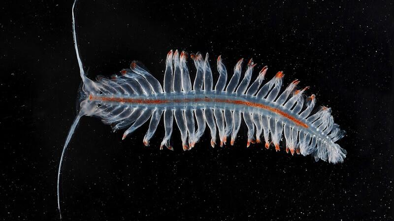 Misterioso ecosistema marino en la Antártida