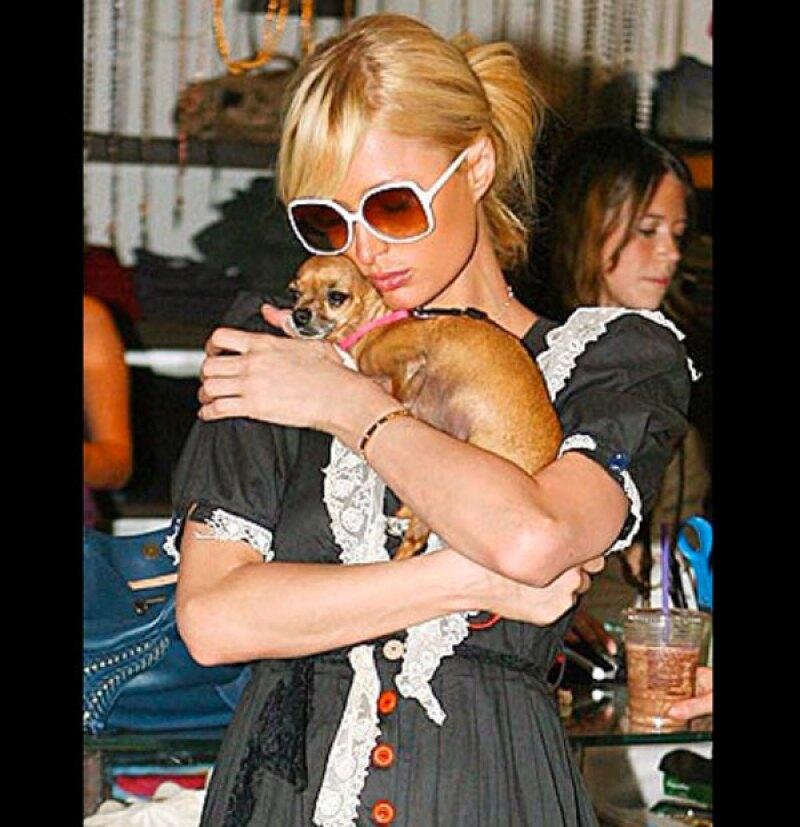 """Después de 14 años de ser una compañera incondicional, Tinkerbell, la perrita chihuahueña de Paris Hilton pasó a mejor vida, por lo que la socialité y modelo está """"devastada""""."""